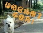 纯白色宠物串串狗售价100啦!
