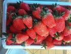 鸿征生态奶莓采摘园