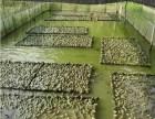 枝江匯澤青蛙養殖科學養殖技術**開啟養殖致富大門