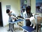 深圳罗湖清水河晚上24小时开门的宠物医院