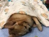 南京寵物火化,正規寵物殯葬公司