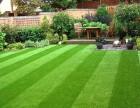 外表相同价格不同,人造草坪价格也有宾利与奇瑞之分