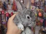 广华菜场诊所一条街老友狗狗宠物会所出售超萌小兔子