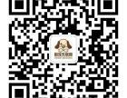 上海购宠无忧网出售纯种 极品苹果头吉娃娃 保证纯种和健康