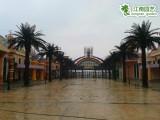 广东仿真植物树图片及价格,江南园艺定制仿真大型海藻树
