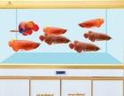 人鱼传奇-厂家直营生态缸、龙缸、风水鱼缸、超白缸