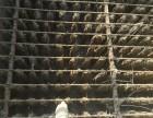 昆山专业工厂污水池清淤 污水处理池清理清淤