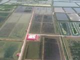 望海水产生产小龙虾养殖基地