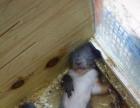专卖魔王松鼠,蜜袋鼯,飞鼠迷你刺猬