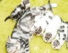 萌太宠物 组建小型猫舍 猫舍加盟