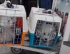 上海宠物托运陆运空运价格表
