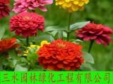 漳州草籽花籽野花组合无纺布植生袋三维土工网椰网边坡绿化材料
