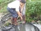 沙湖污泥池沉淀池清理潛水打撈高壓清洗管道堵水