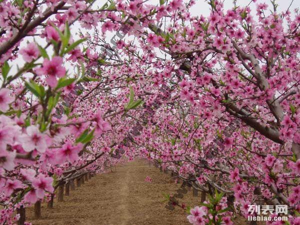 上海农家乐一日游 采草莓赏桃花 游滴水湖 吃土菜