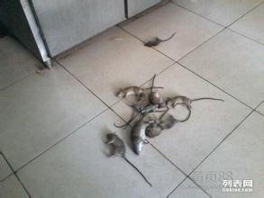 宁波杀虫灭鼠就找铭飞消杀
