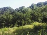 栾川庙子300亩土地寻找优质合作商