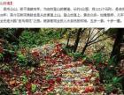 信阳鸡公山景区门票 夏季避暑好去处