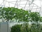 海南省三亚市河东区(虚拟街道办)35亩设施农用地出租