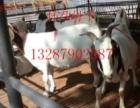 出售 牛驴 黑山羊 白山羊 波尔山羊 鲁西黄牛 德州驴 包送