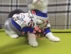 广州哪里有正规宠物店买卖蓝猫 广州较便宜蓝猫多少钱