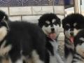 贵阳宠物救助领养中心----提供身份证实