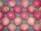 山东新红星苹果什么价格哪里种植商便宜