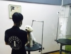 小型犬高端洗护套装(一流环境)