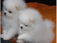 长沙哪里有小狗领养 长沙哪里有小狗赠送