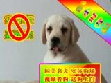 正规狗场繁殖、随时送货、种公借配、可看狗父母、拉布拉多犬