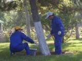 郴州市园林绿化养护草皮苗木维护