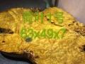 荷叶1号黄金樟茶盘