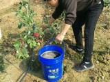 葡萄草莓专用肥腐植酸冲施肥桶肥液肥水溶肥