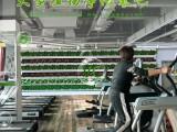 定制室内大型植物净化氧吧 室内工厂制氧净化设备