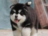 大型实体狗场直销各种世界名犬 保健康纯种 上门参观挑选