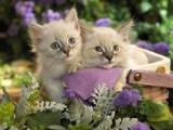 河源高颜值白甜可爱的无毛猫出售 健康黏人好养活