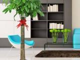 南昌花卉绿植盆栽销售及租赁辉煌园艺