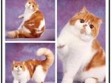 哪里有出售精品寵物加菲貓包純種健康送貨上門