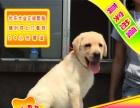 优惠中狗狗用品任意选纯种拉布拉多出售签合同