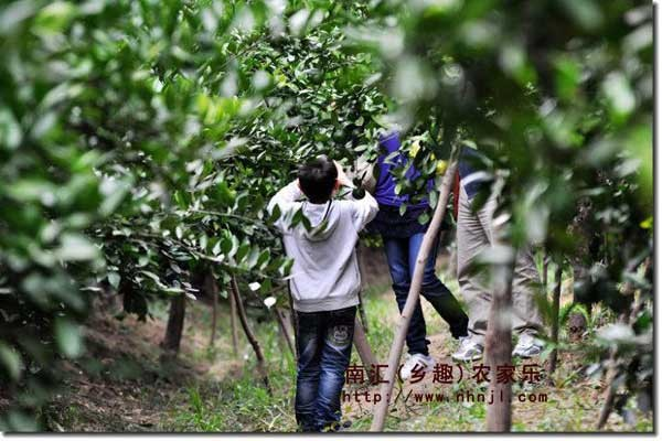 上海农家乐推荐 吃土菜 逛田园 采草莓 摘桔子 钓大鱼