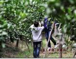 上海滴水湖附近农家乐 采葡萄吃土菜 自助烧烤 垂钓划船拓展