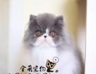 出售波斯猫,包纯种包健康,售后有保障出售波斯猫,包