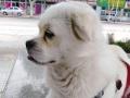 宠物家庭式寄养,让宠物在你离开的时间,同样得到家庭的温暖