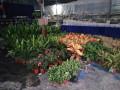 有苗圃 专业承接绿植租摆 盆栽景观 绿化养护
