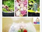 植物微景观玩逸生活,打造创意场景布局