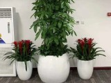 绿植租赁.花卉租摆.盆栽租赁.免费上门设计