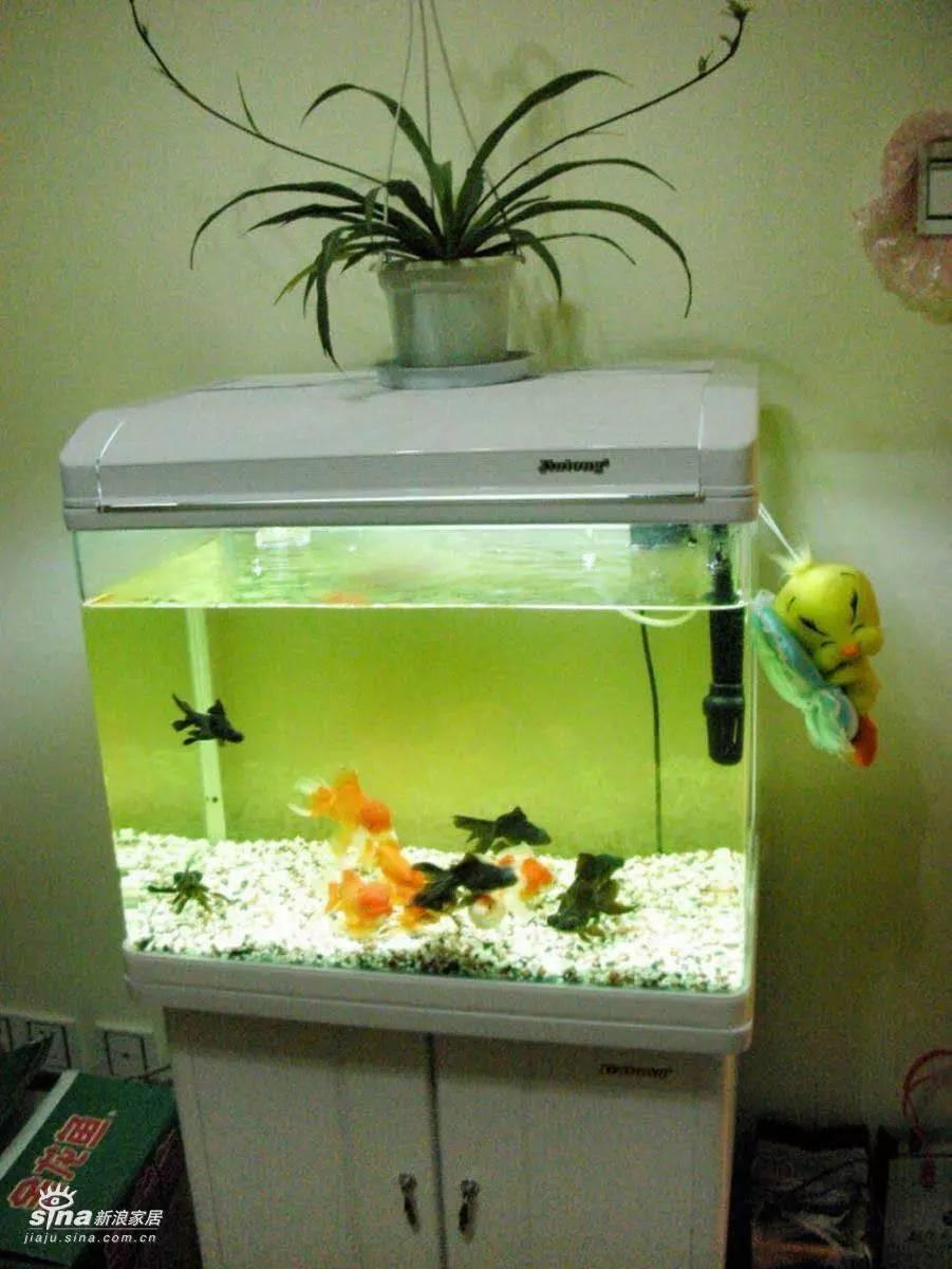 鱼缸保洁清洗 专业处理鱼缸水发绿发白 鱼缸发黄浑浊
