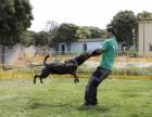 中山宠物训练中山宠物寄养中山宠物学校