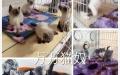 常德市火车站 出售各类宠物猫