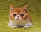 南宁买猫 眼鼻加菲猫多只找新家健康保证 可上门 全国包邮