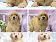 北京哪里有宠物出售 北京拉布拉多多少钱 北京泰迪价格